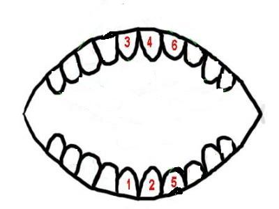 宝宝出了六颗小牙了
